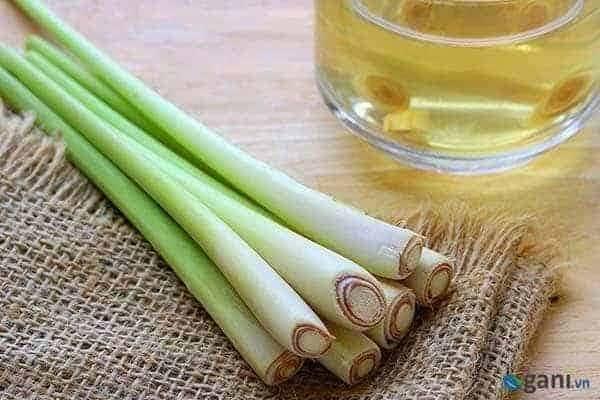 Tinh dầu sả chanh Lemongrass