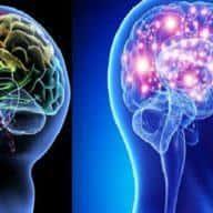 so sánh chất xám và chất trắng trong não bộ