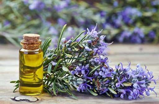 Tinh dầu Hương thảo được xem là liều thuốc chữa trị chứng mất ngủ, cải thiện tinh thần cực kỳ tốt
