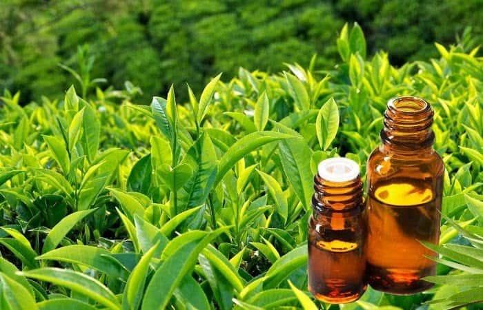 Tinh chất trà xanh giúp đánh bay mụn và ngăn mụn quay trở lại