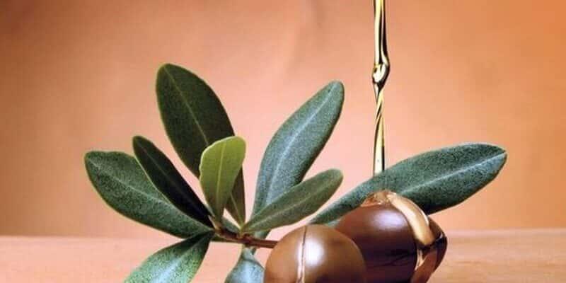 Argan oil là gì? Thành phần và công dụng thần kỳ cho sắc đẹp 1