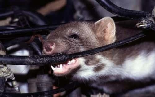 9 cách chống chuột cho ô tô