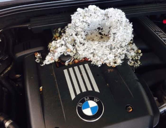 Phát hiện có rác vụn trong xe ô tô là có chuột xâm nhập
