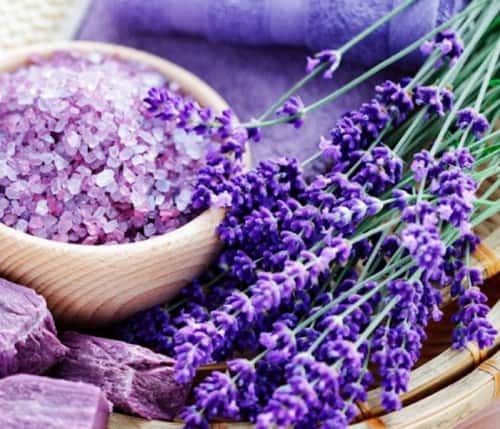 Cách bảo quản hoa oải hương Lavender khô
