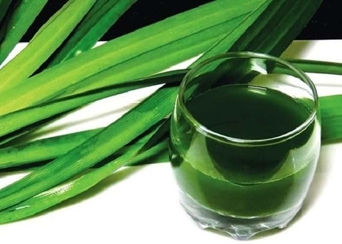 Làm tinh dầu lá dứa đơn giản tại nhà