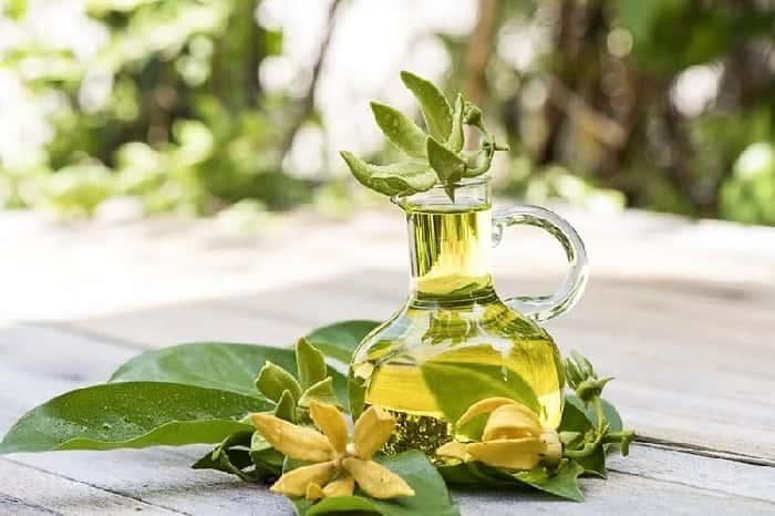 Tinh dầu ngọc lan tây ngọt ngào