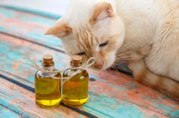 Nhìn chung tinh dầu được xem là an toàn cho thú cưng nếu sử dụng đúng cách